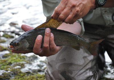 Fly Fishing - Grayling - Northern Saskatchewan Fishing (Mawdsley Lake Fishing Lodge)
