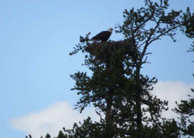 Eagles Nest - Northern Saskatchewan Fishing WildLife (Mawdsley Lake Fishing Lodge)